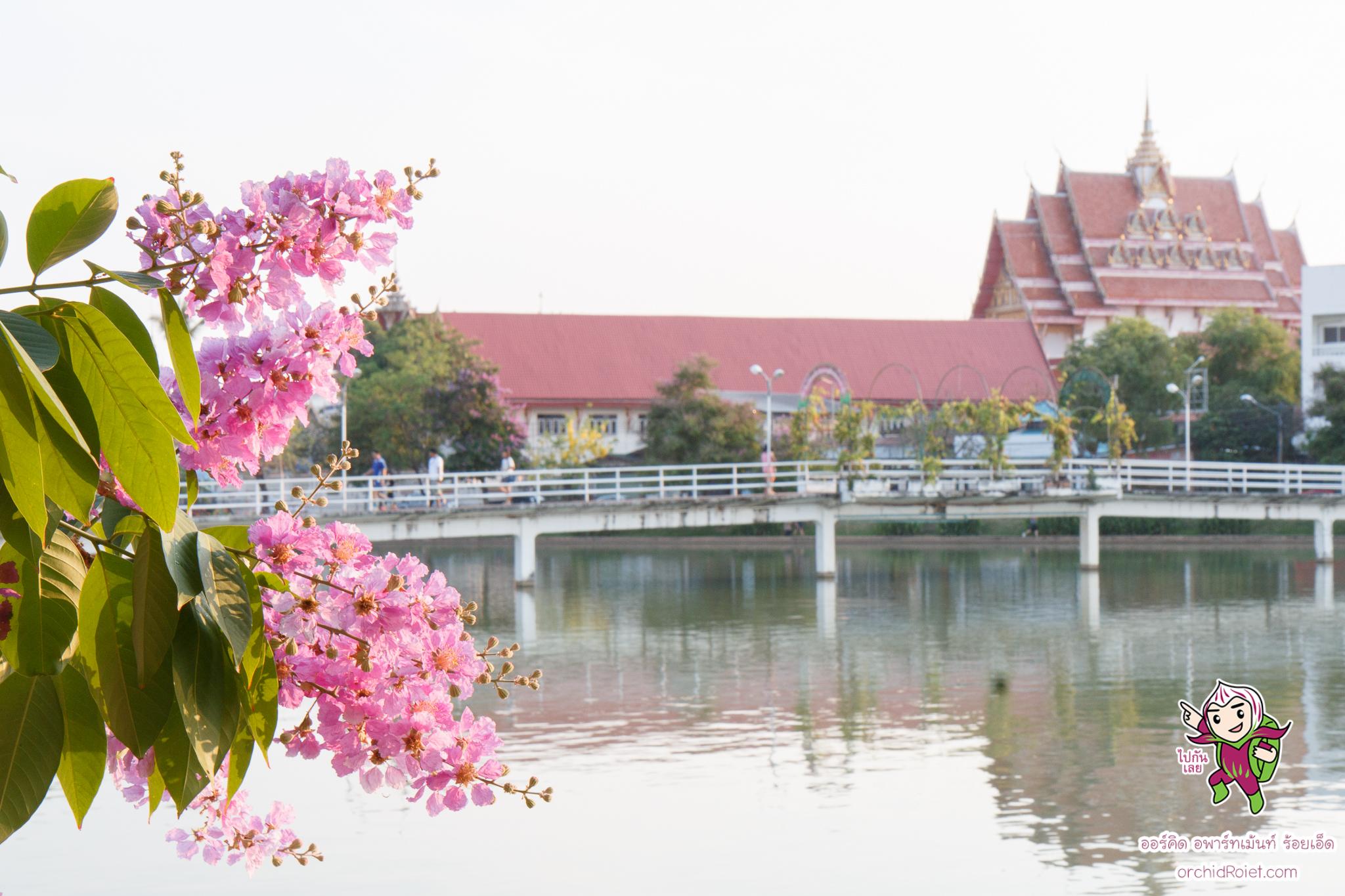 ออร์คิด อพาร์ทเม้นท์ ร้อยเอ็ด ที่พักดี ในเมืองร้อยเอ็ด www.orchidroiet.com