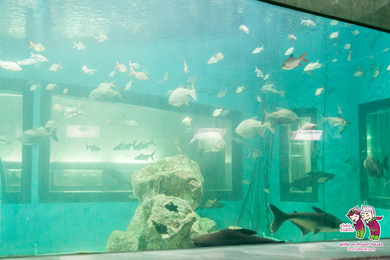 Aquarium_Roiet_002